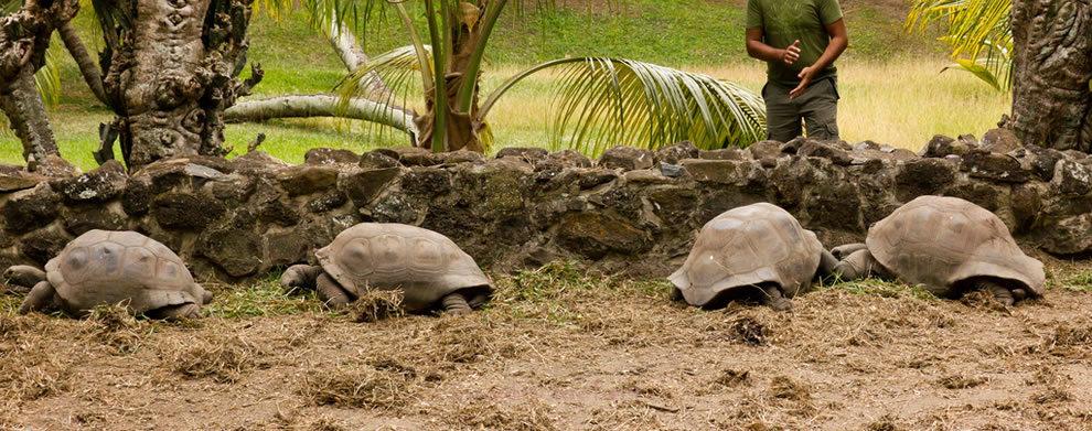 Aldabra Atoll, located in Seychelles, home to the world's largest population of giant tortoises