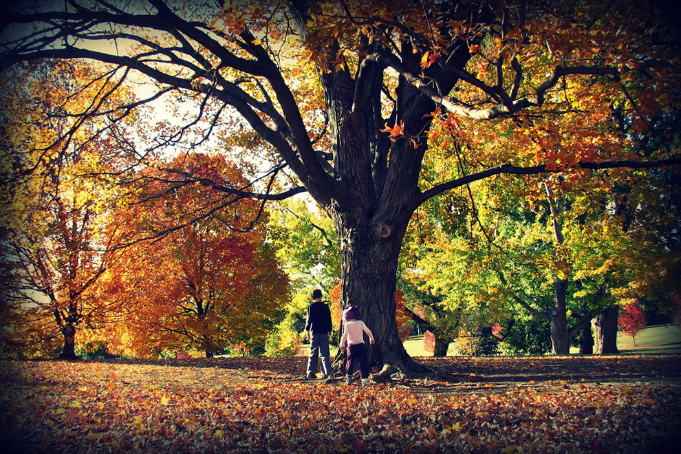 Autumn in Kansas, kids playing in the fall foliage