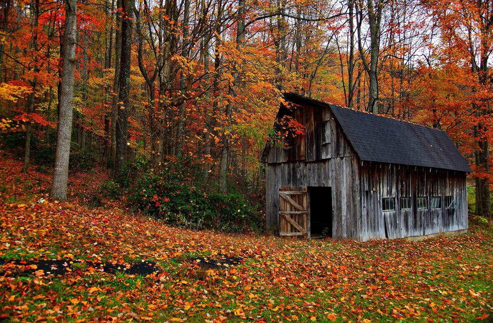 Fall foliage and country barn autumn in west virginia
