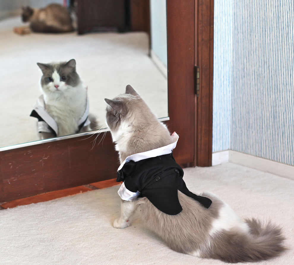 A Nervous cat Groom