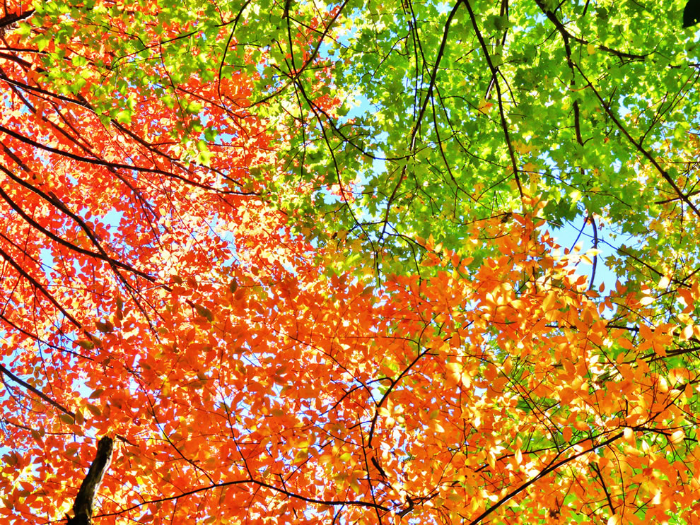 Autumn leaves Applachian Trail, Smoky Mountains