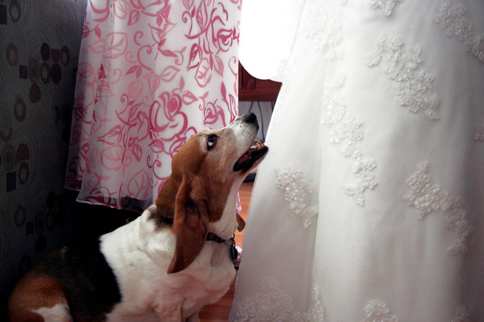 Bride & her Beagle