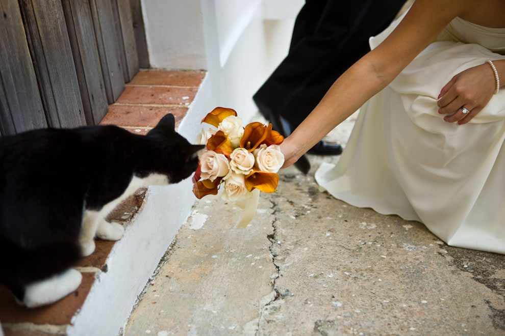 Cat and the wedding bouquet
