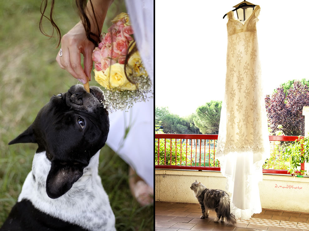 French bulldog in wedding, The guard of the wedding dress