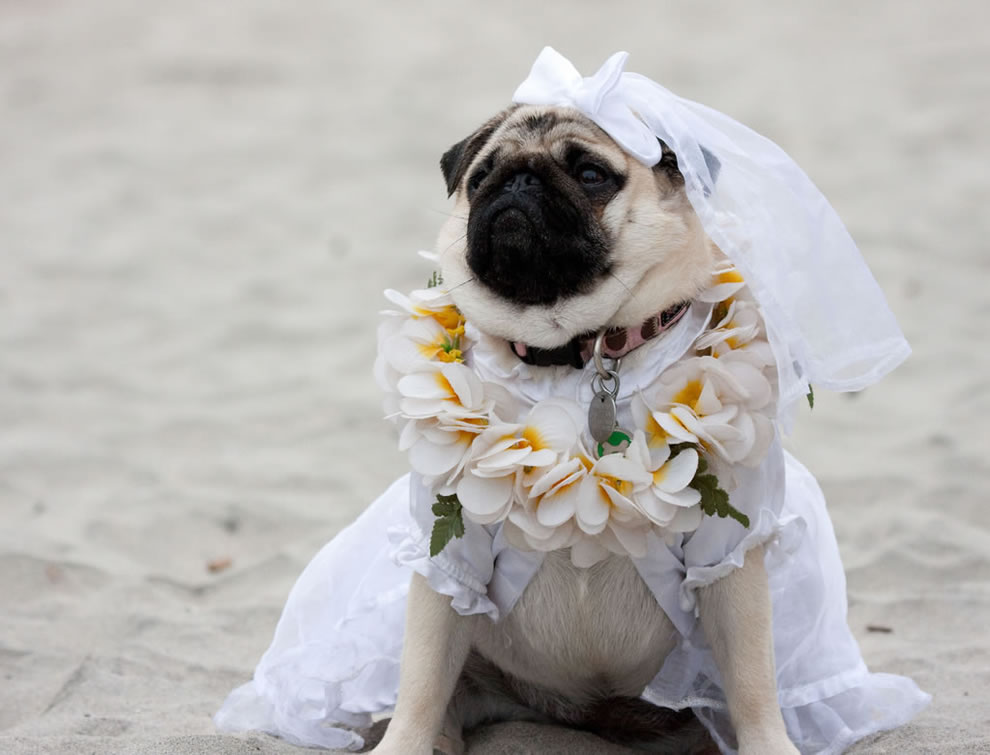 Here comes the dog Bride