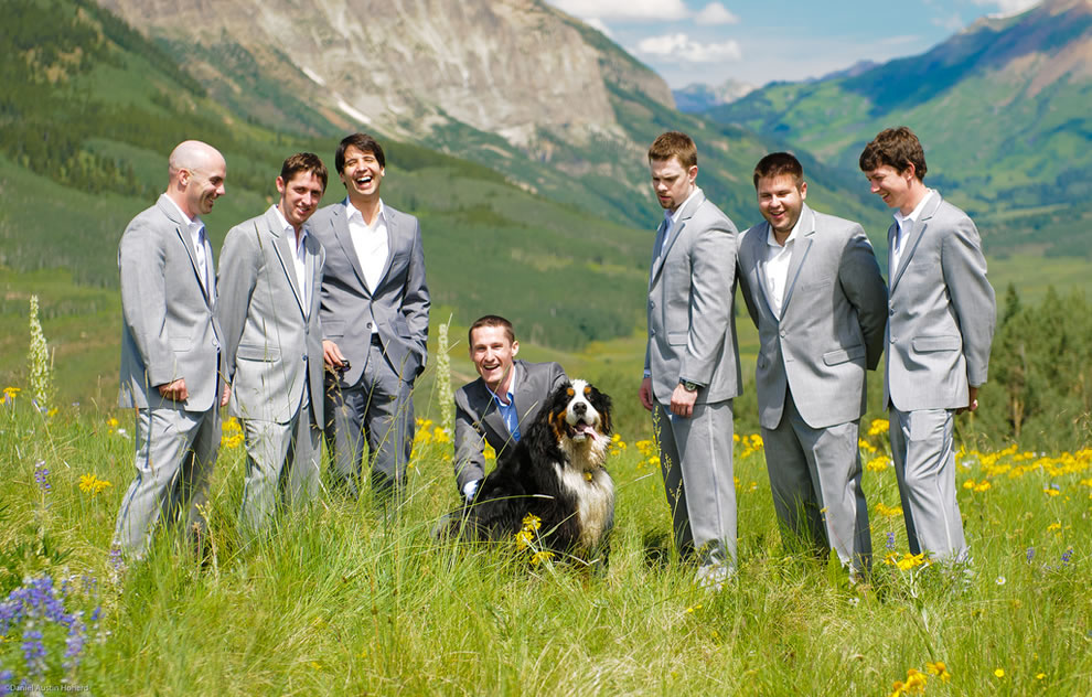 Huge dog with groomsmen wedding party