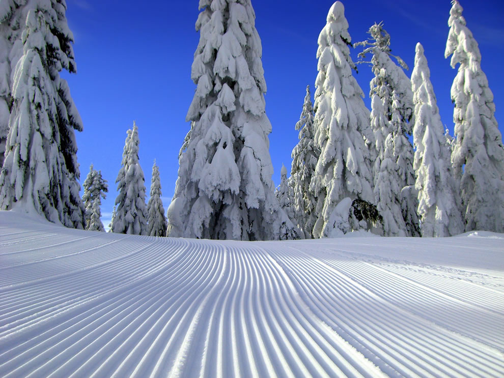Mt. Baker-Snoqualmie National Forest, snowy Snoqualmie Pass, Washington, US