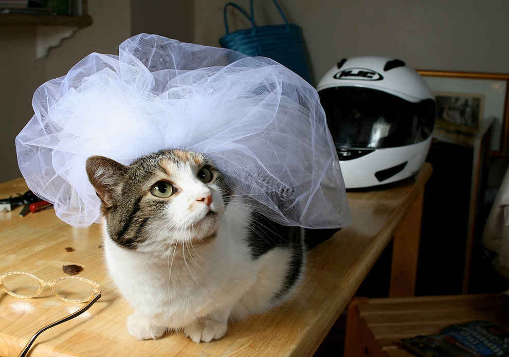 Sashi the cat Bride