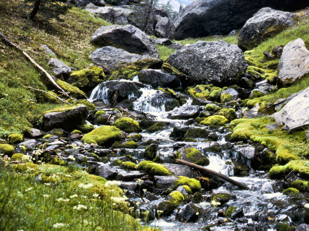 Thielson Creek in Fremont Winema National Forest