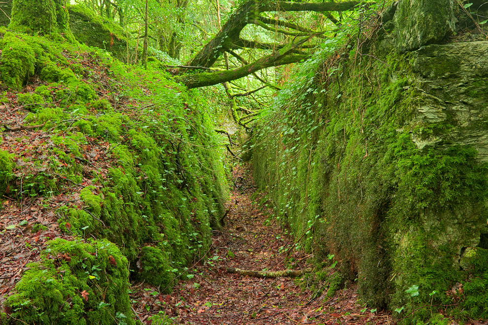Ancient Emerald Forest Trail in Killarney National Park