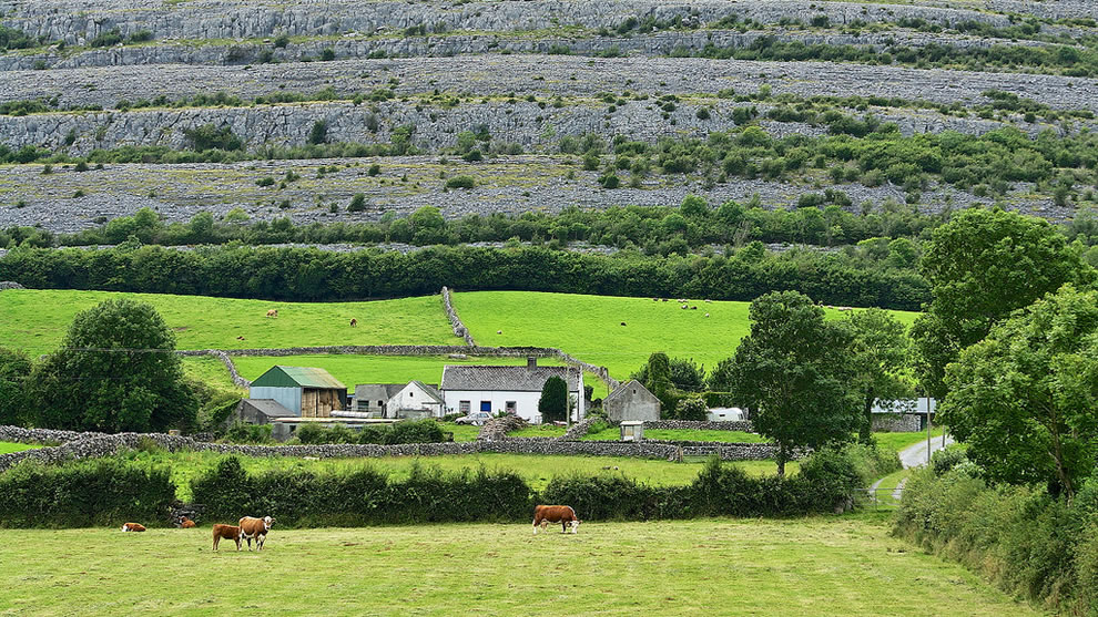 Farming on the Edge of The Burren, Burren National Park