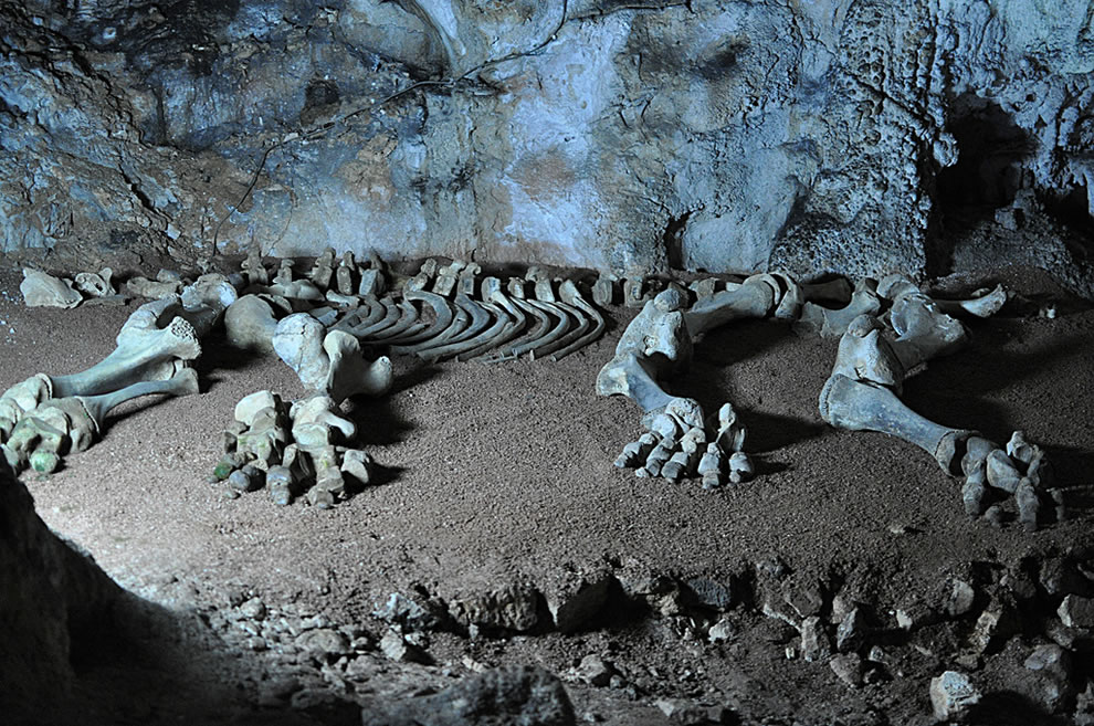 Mammoth bones in Marble Cave, Crimea, Ukraine