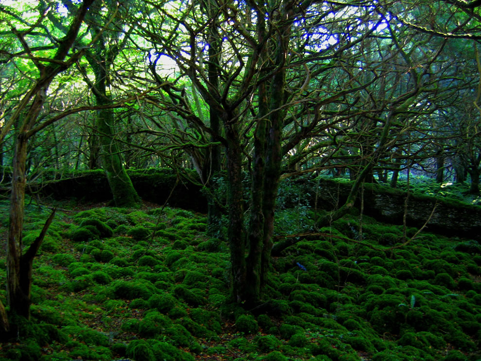 Moss Forest, Killarney National Park