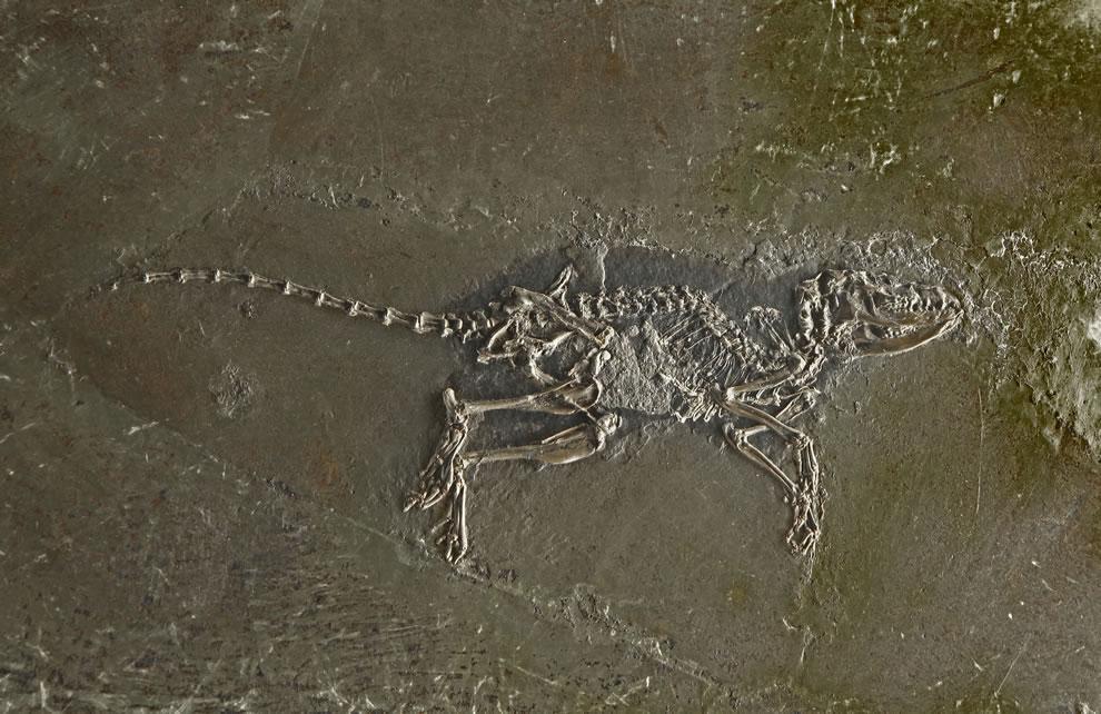 Dino bones