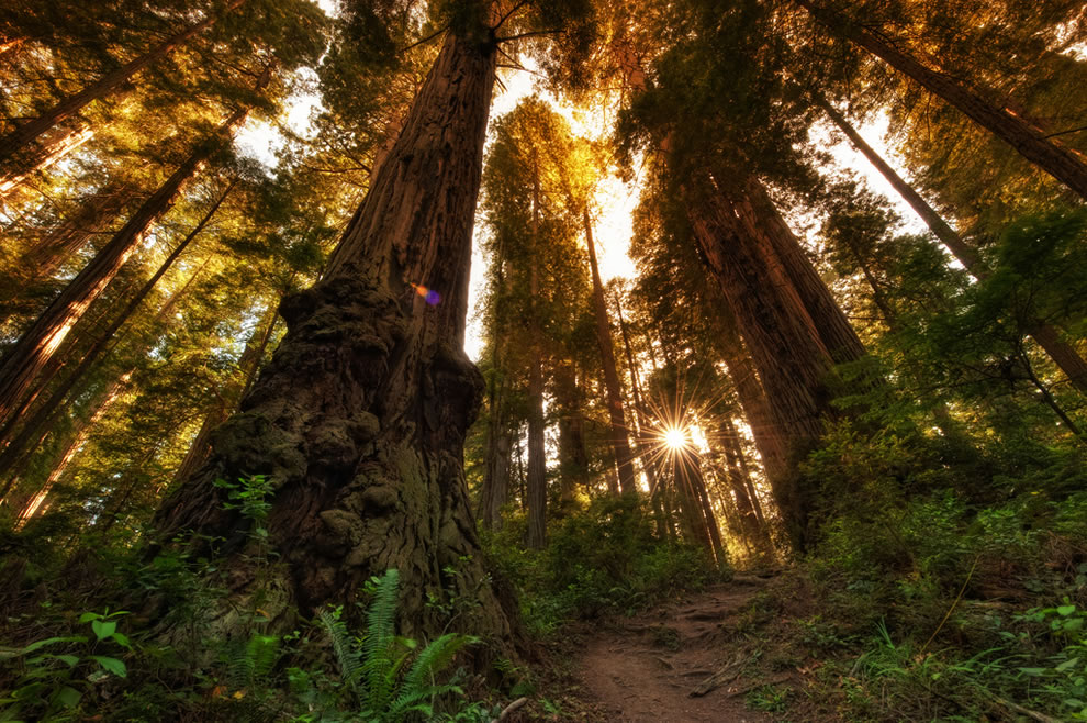 James Irvine Trail in Prairie Creek Redwoods State Park
