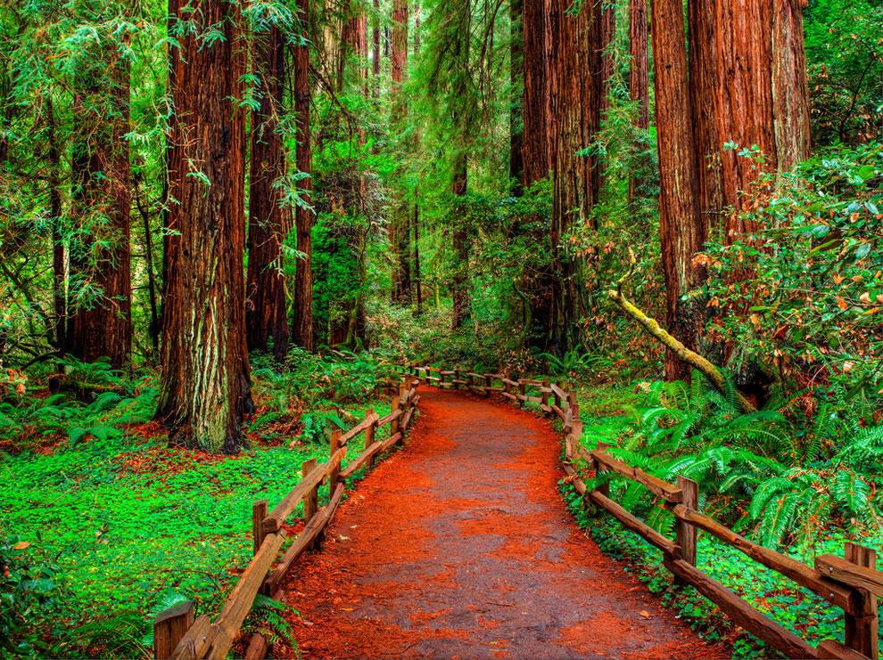 Muir Woods Walkway, redwoods