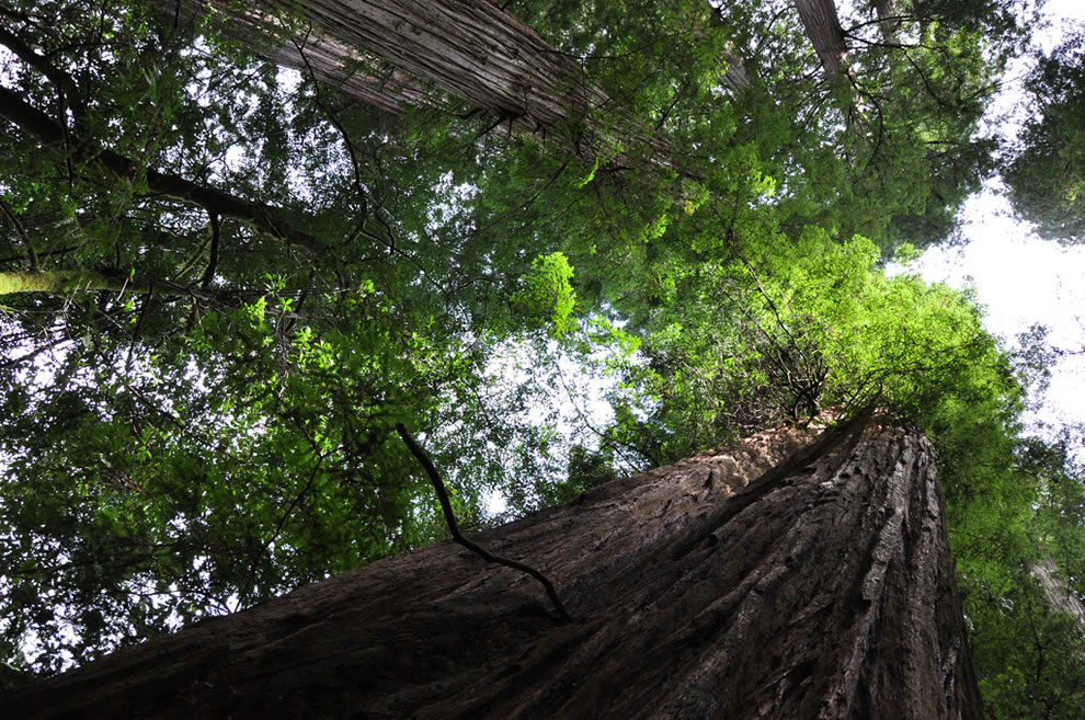 Redwoods of northern California, splash of green