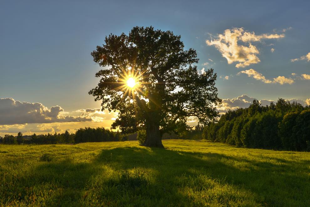Tamme-Lauri oak, oldest tree in Estonia