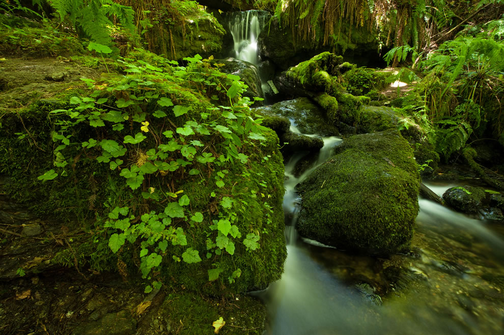 Trillium Falls, Prairie Creek Redwoods State Park, California
