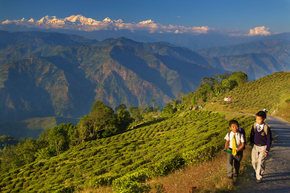 Living on Mountains of Tea in Darjeeling, India