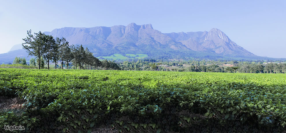 Mulanje Mountain, Malawi from tea plantation
