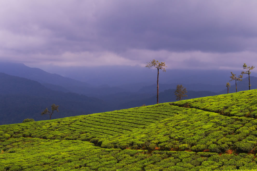 Scenic View of Valparai