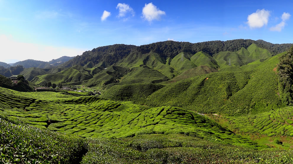 The Bharat Tea Plantation near Tanah Rata in the Cameron Highlands, Malaysia
