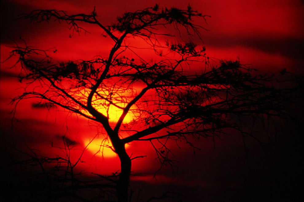 Bloody sunset at Everglades, Florida