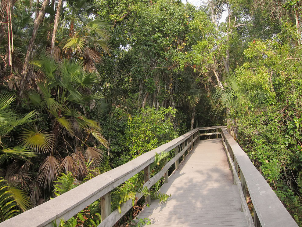 Everglades National Park Mahogany Hammock Trail