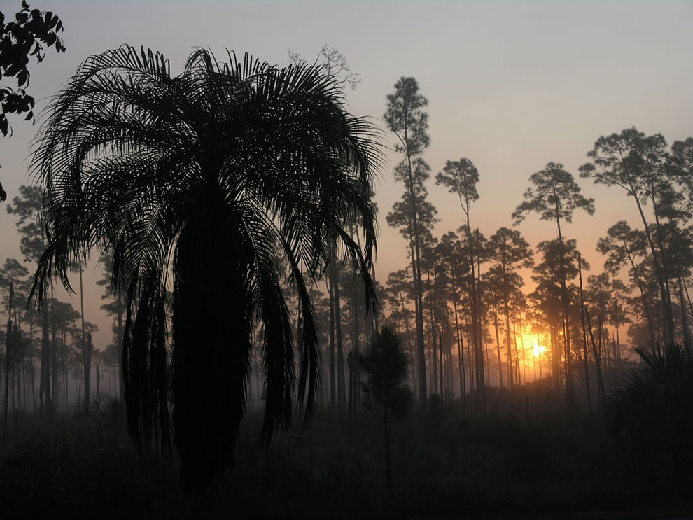 Everglades National Park pinelands sunrise