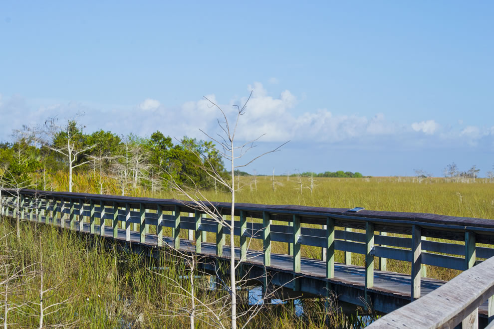 Pa-hay-okee Overlook, Everglades NP habitat