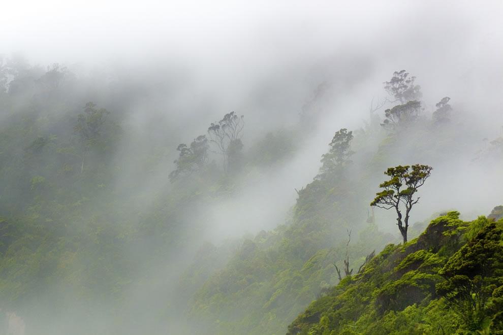 Mists of time on the Punakaiki Coast
