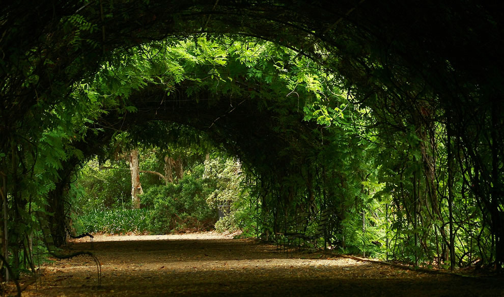 Tunnel of Love at Adelaide Botanic Gardens