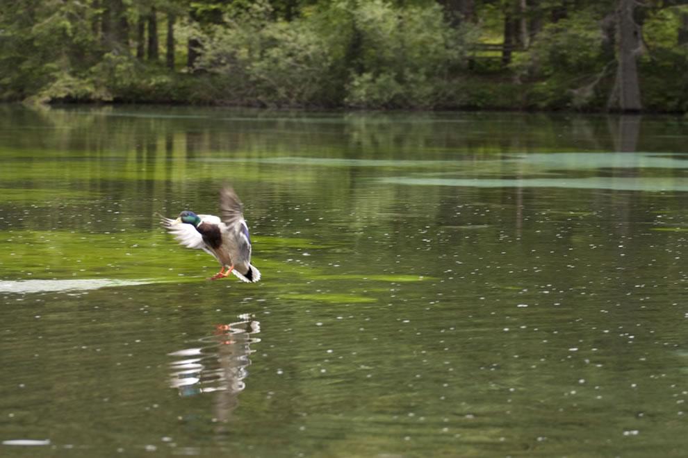 Wildlife at Green Lake