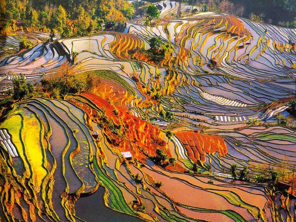 Colorful rice terraces
