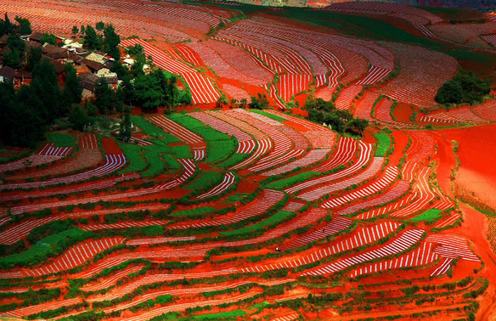 Patterns growing in the Red Land