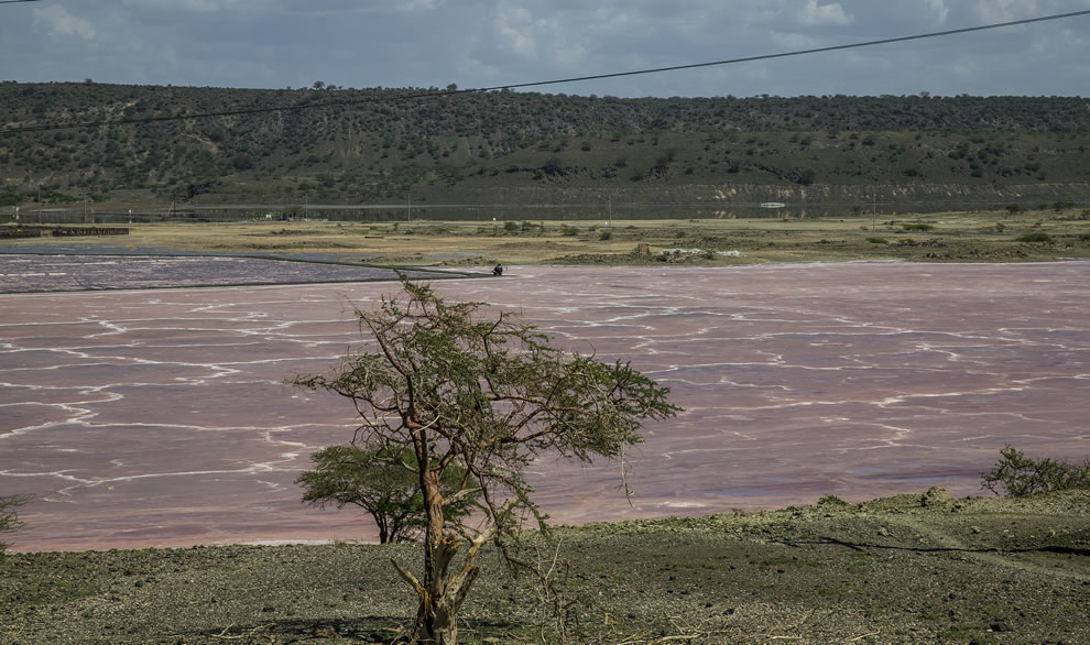 Pink Lake Magadi in the Kenyan Rift Valley