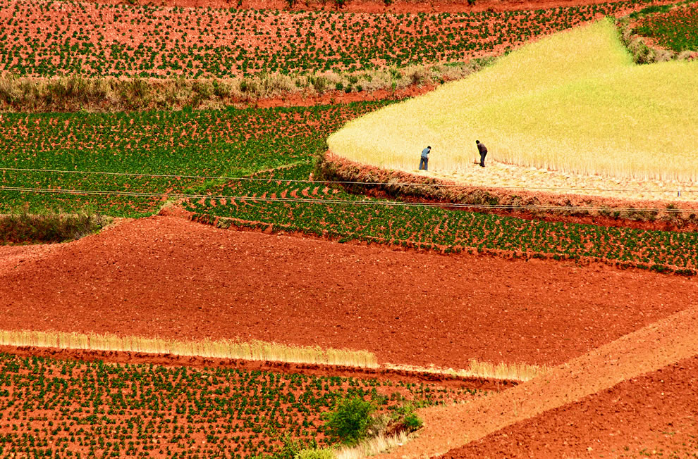 Workers in the fields of Dongchuan