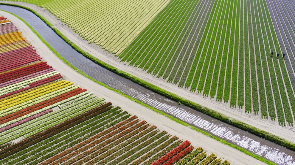 Dronestagram 3rd Prize Winner in Category places Tulip fields