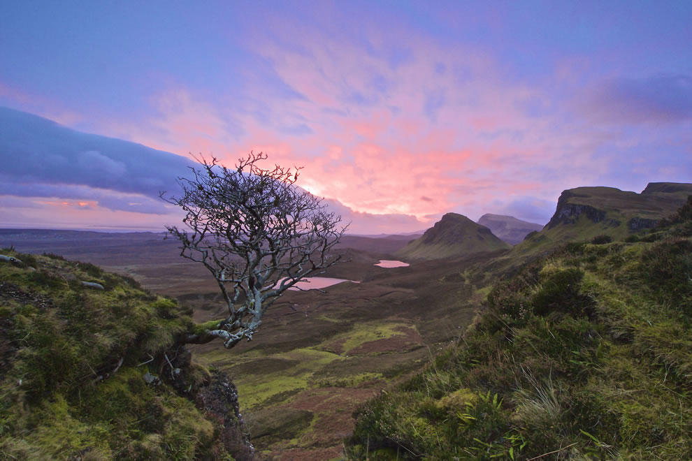 Quiraing Tree, Isle of Skye