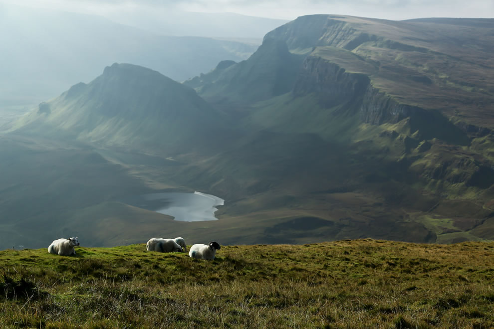 Sheep on Isle Of Skye, seen while on hike in Quiraing
