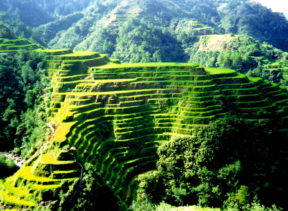 Mountain of Rice - rice terraces