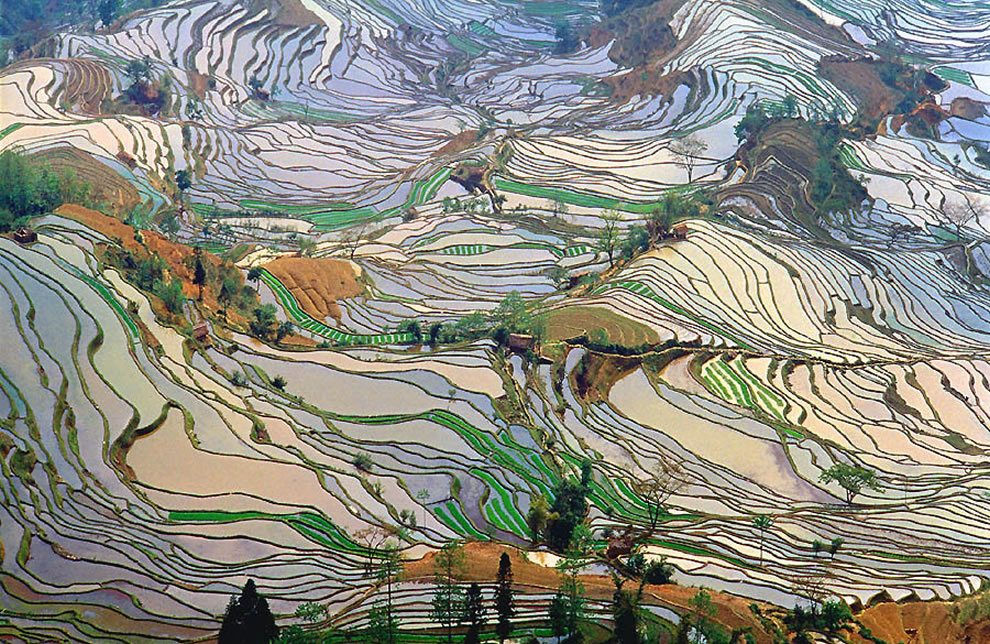 Terrace rice fields in Yunnan Province, China