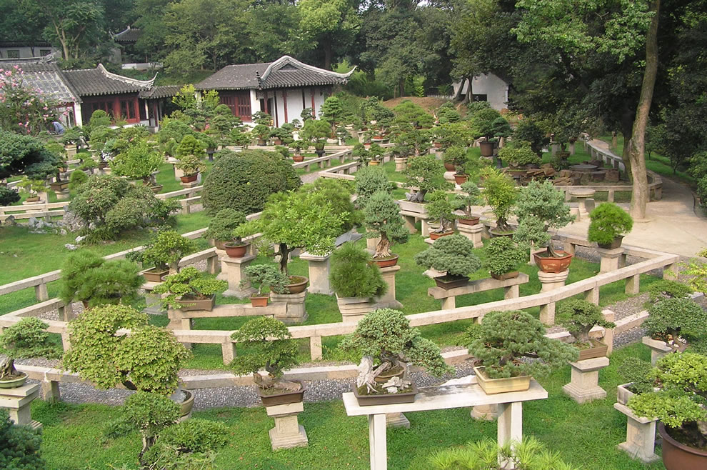Bonsai forest at the gardens of pagoda Yunyan Ta China - Chinese Gardens