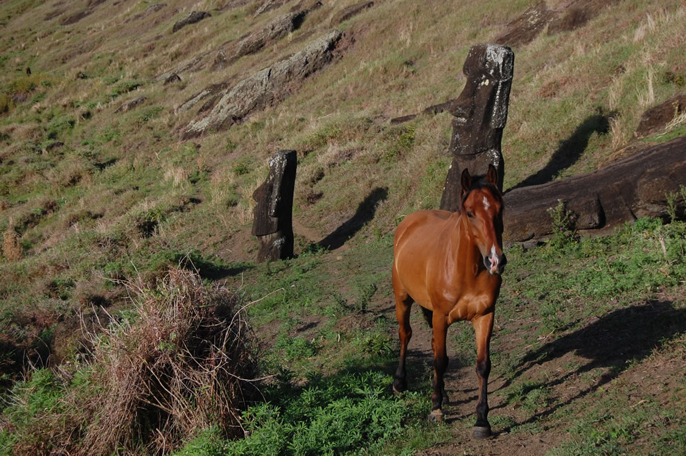 Chile, Easter Island - Horse following trail through the moai of the Rano Raraku quarry