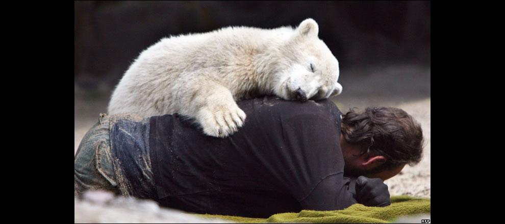 Polar Bear Knut - I love you too