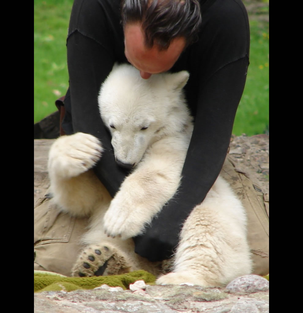 Thomas Dörflein playing with Knut in May 2007