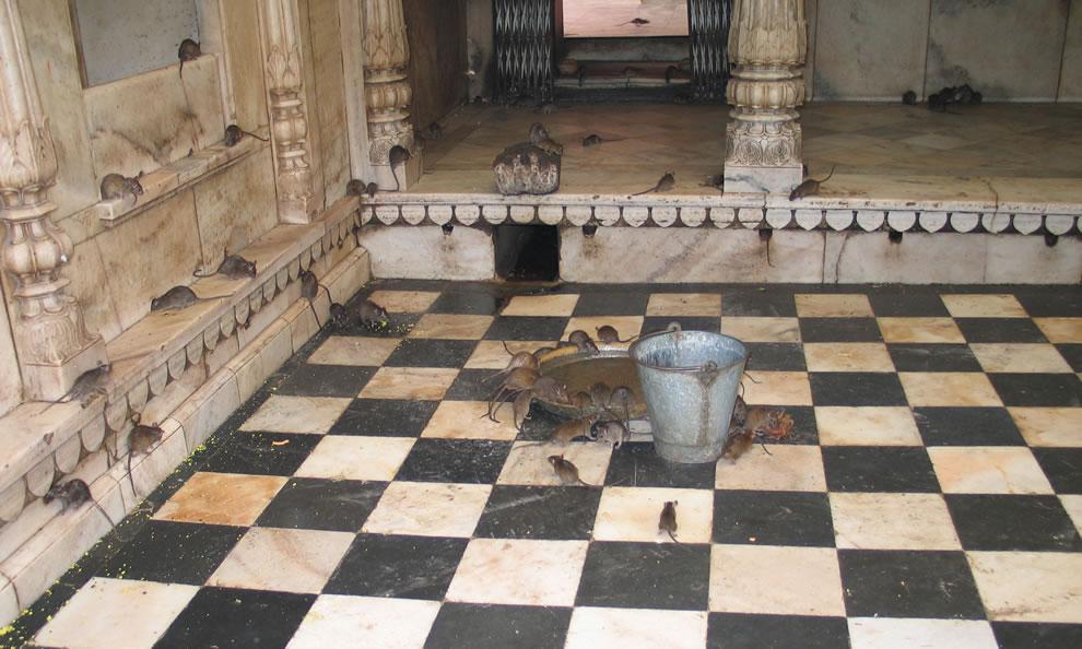 Karni Mata Temple, India