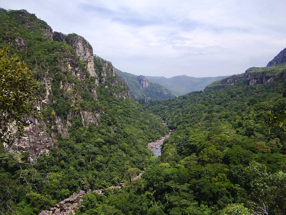 ale do Rio Preto Chapada dos Veadeiros - Goiás - Brasil