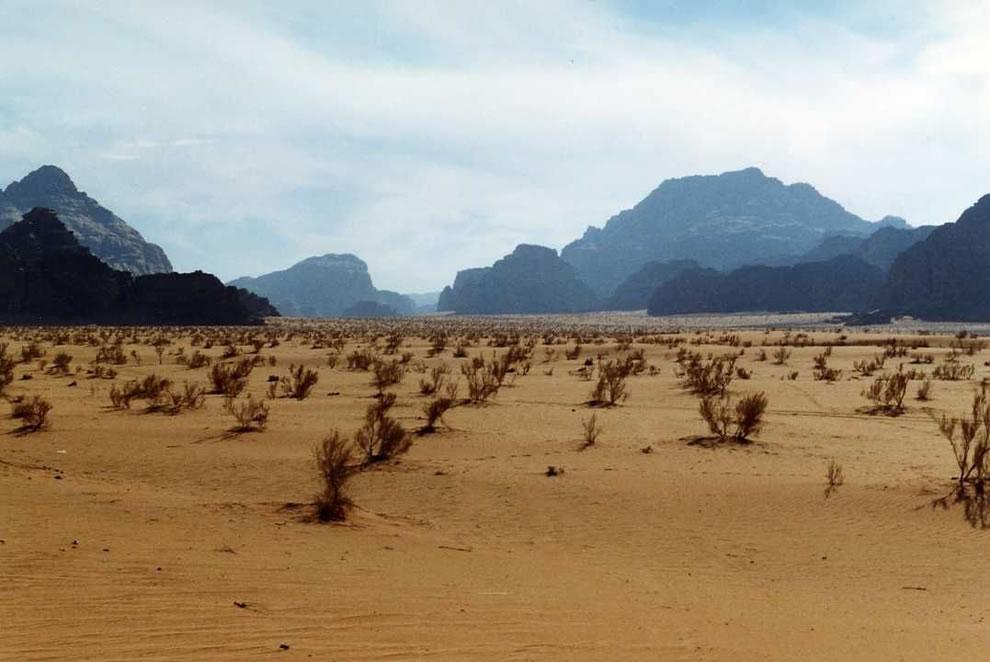 vegetation at Wadi Rum